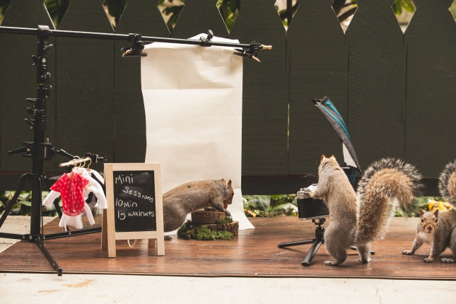 Squirrels interacting with photo studio scene