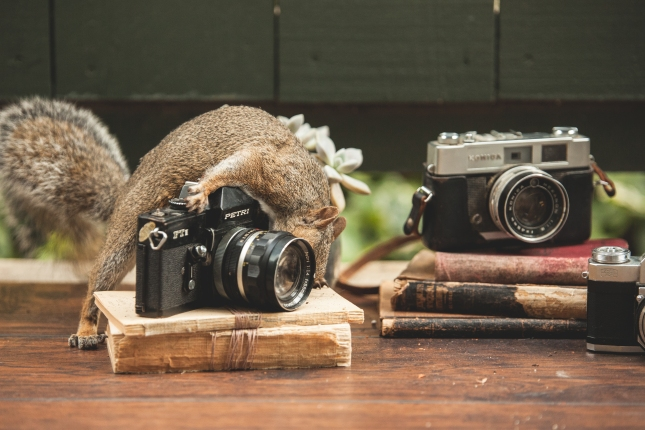 Squirrel playing with camera